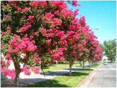 Pátio das Flores: Árvores ornamentais para o paisagismo