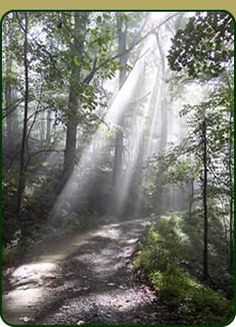 Southern Dharma Retreat Center- Hot Springs, NC. Want to do the mediation, mindfulness, and yoga retreat in September.
