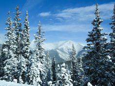 👌 Christmas cold colorado evergreens - get this free picture at Avopix.com    ☑ https://avopix.com/photo/54370-christmas-cold-colorado-evergreens    #fir #tree #winter #christmas #xmas #avopix #free #photos #public #domain