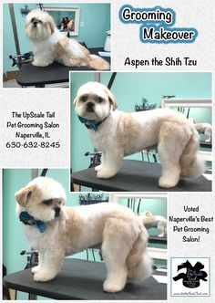 15 best st patricks day pet grooming at the upscale tail welcome to the upscale tail the best award winning certified pet grooming salon in naperville il with over 50 years combined experience in the industry solutioingenieria Image collections