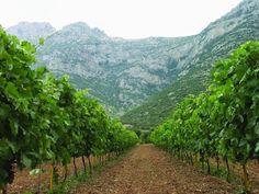 Nemea , Greece