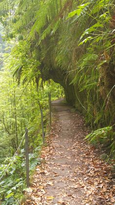 Levada da Faja do Rodrigues