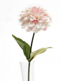 Zinnia - Pale Pink