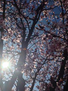 #lleida #primavera