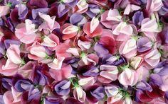 Imagem de flowers, photography, and pink