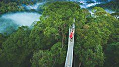 Walk Above A Rainforest •Travel To Borneo Island