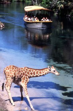 Florida Memory - Visitors on tour boat looking at a giraffe at the Silver Springs attraction in Ocala, Florida.