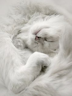 Curled in white <3