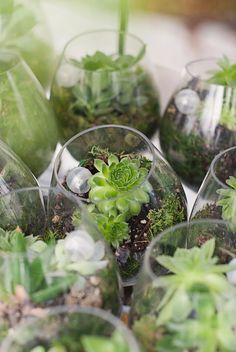Adorable little succulents in clear glasses - great as wedding table centerpieces or as favors for the guests to take home