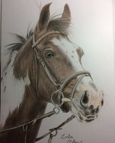 All finished, off to the framers and then hopefully on display in Horsham Drill hall from the 18th august. He is for sale! #sportshorse #drawing #equestrianartist #equestrianart #horse #horses #art #artist #artshelp #artshare #pencils #portrait #petportrait #pencildrawing #instalike #realism #horsesofinstagram