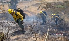 FEATURED POST   @epn564 -  BDF E338 bringing in hose to support Div A on the #MelvinFire @epn564 @SanBernardinoNF .  ___Want to be featured? _____ Use #chiefmiller in your post ... http://ift.tt/2aftxS9 . CHECK OUT! Facebook- chiefmiller1 Periscope -chief_miller Tumblr- chief-miller Twitter - chief_miller YouTube- chief miller .  #firetruck #firedepartment #fireman #firefighters #ems #kcco  #brotherhood #firefighting #paramedic #firehouse #rescue #firedept  #workingfire #feuerwehr…