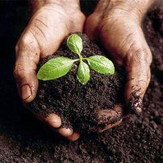 Los beneficios del uso de compost elaborado a partir de la mezcla de materias orgánicas, son muchos y variados.  Su gran riqueza en oligoelementos y macronutrientes lo convierte en un fertilizante completo. Mejora la estructura del suelo incorporando materia orgánica rica en sustancias húmicas.