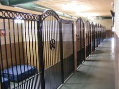 Elite Suites Pet Resort~ Our guest suites include custom wrought iron beds with a spring coil mattress, colorful artwork, television access, and a camera for you to see them 24/7!