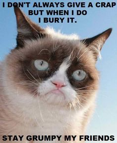 Everytime I see grumpy cat memes, I laugh hysterically. I need humor in my life sometimes. It keeps from taking everything in life way too seriously. Grumpy Cat Quotes, Funny Grumpy Cat Memes, Funny Animal Memes, Funny Cats, Funny Animals, Cute Animals, Funny Memes, Grumpy Kitty, Animal Funnies