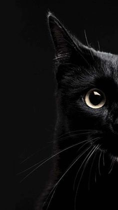 39 Cute Cat Wallpaper for Cat People wallpaper,cat wallpaper,cat,pet Iphone Wallpaper Cat, Tier Wallpaper, Cute Cat Wallpaper, Animal Wallpaper, Wallpaper Pictures, Black Wallpaper, Cat Background, Photo Chat, Cat Photography