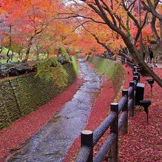Trees with autumn red leaves along bending river in Kyoto_ Japan
