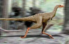 Linhenykus NT - Linhenykus - Wikipedia, the free encyclopedia