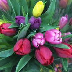Spring is coming  #tulips #blooms #flowers