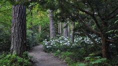 Puheen Aamu: Kesäretki Arboretum Mustilassa | Radio | Areena | yle.fi