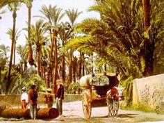 Fotos Antiguas de Elche (Huertos y Palmeras)