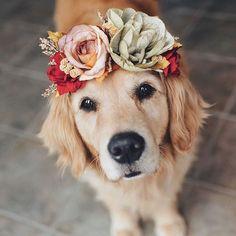 Inspiration for dog flower crown Cute Baby Animals, Funny Animals, Perros Golden Retriever, Golden Retrievers, Retriever Puppies, Labrador Retriever, Dog Wallpaper, Dog Modeling, Dog Wedding