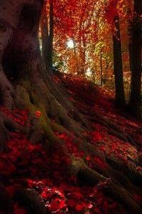 Autumn landscape More - Nature Photo - Best Nature Photos - Beautiful Natural Photos Beautiful World, Beautiful Places, Beautiful Pictures, Beautiful Scenery, Wonderful Places, Autumn Lights, All Nature, Autumn Nature, Autumn Scenery