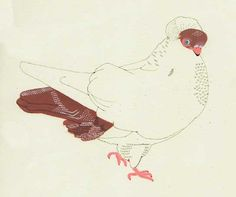 A beautifully groomed pigeon from Anne  Ruozhu Sun