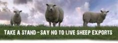 tagging questions Sheep, Wordpress, This Or That Questions, Tags, Live, Animals, Animales, Animaux, Animais