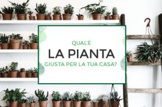 Piante da interno: qual è la pianta giusta per la tua casa?