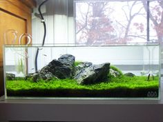 Planted Tank Gallery - long (if shallow) aquariums are beautiful. I think the 90cm may be the way to go