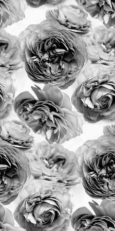 Romantique, ce papier peint est merveilleusement doux avec de grandes roses qui permettent que ce soit l'été toute l'anné