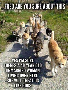 Crazy Cat Lady Starter Pack.