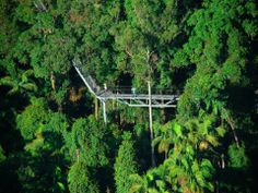 The forest canopy walk Gold Coast Hinterland