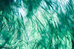△ facebook △ tumblr △ instagram △ iPhone photography △ Twitter △ DeviantArt   Fuji XT1 + Zhongyi Lens Turbo II + Nikon 50mm F1.8 Series E Pancake