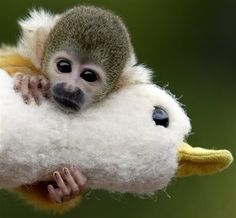 monkey with toy