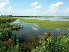 De Biesbosch….een schitterend natuurgebied