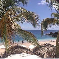 Palm trees and an ocean breeze. Ahhhh....  #tantowel