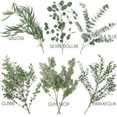 Choose Your Own Eucalyptus Greenery Pack