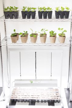 seed-starting-with-a-grow-light