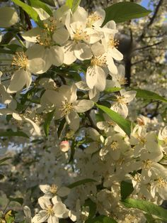 Blossoms outside work
