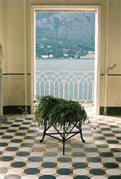 vingt septembre. tile floor, weeping moss, interior to exterior photo