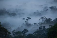 The Ancient Forests of Borneo - Danum Valley Conservation Area