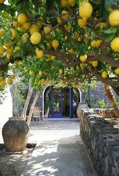 Memories of the Lemon Trees in Sorento, Italy & the Limonchello Liqueur