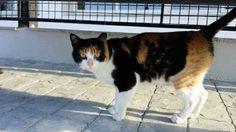 Cristicats, salvando gatos!!!: Moni