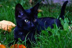 Le petit chat by Eva Slusar on 500px