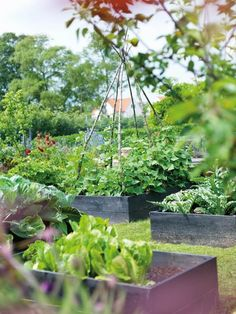 trend alert: stained raised beds | gardenista. Give your veg. patch good bones by raising the middle with teepees and arches to make use of the vertical space.
