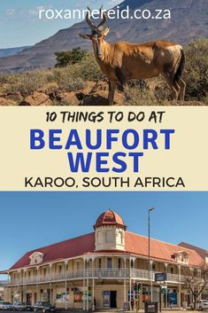 Don't blow past this Karoo town in a rush; stop over and discover 10 things to do in Beaufort West. Kruger National Park, National Parks, Beaufort West, Mountain Zebra, Stuff To Do, Things To Do, Wildlife Safari, Slow Travel, Africa Travel