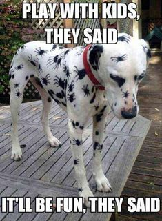 Funny Animal Memes Of The Day – 52 Pics – Lovely Animals World Memes de animales divertidos del día – 52 fotos – Lovely Animals World Funny Dog Memes, Funny Animal Memes, Cute Funny Animals, Funny Animal Pictures, Cute Baby Animals, Funny Dogs, Funniest Animals, Funniest Pictures, Funny Photos