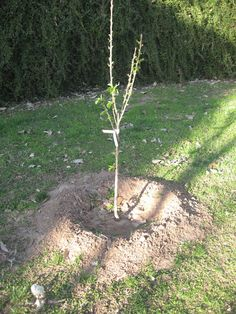 Sweet Life Garden: Plant a Fruit Tree!