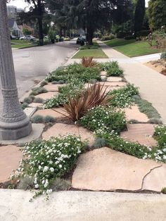 Examples of how homeowners are replacing grass parkways with more drought tolerant landscaping and trying to preserve our neighborhood's park-like setting originally planned for lawns.